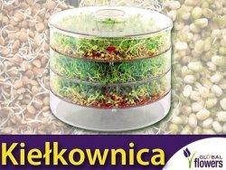Kiełkownica - naczynie do domowej hodowli kiełków