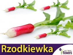 Rzodkiewka OPOLANKA (Raphanus sativus) nasiona 5g