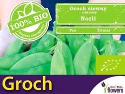 BIO Groch cukrowy Norli 15g