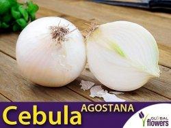 Cebula biała Agostana (Allium cepa) XL 100g