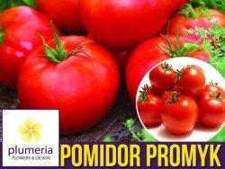 Pomidor PROMYK gruntowy (Lycopersicon Esculentum) nasiona 0,5g
