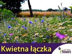 Kwietna łączka - mieszanka kwiatów polnych nasiona XXL 500g