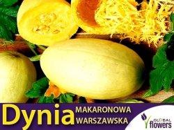Dynia makaronowa Warszawska (Cucurbita pepo) XL 100g