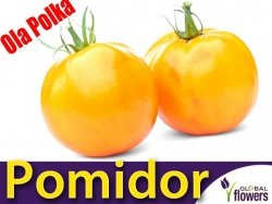 Pomidor OLA POLKA (Lycopersicon Esculentum) nasiona 1g