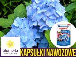Agrecol Kapsułki nawozowe do hortensji niebieskich 14 kapsułek