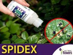 SPIDEX dobroczynek szklarniowy (zwalcza przędziorka chmielowca)