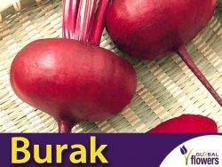 Burak ćwikłowy Egipski D'Egypte (Beta vulgaris var.conditiva) nasiona 10g