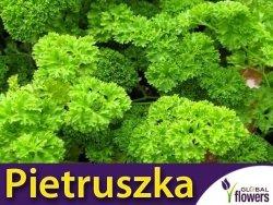 Pietruszka naciowa kędzierzawa 'Moss Curled 2' (Petroselinum crispum) nasiona  5g