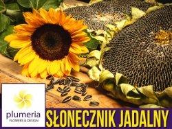 Słonecznik ogrodowy jadalny - ZESTAW  10x10g nasiona W2