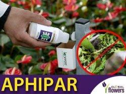 APHIPAR mszycarz szklarniowy (do zwalczania mszyc)