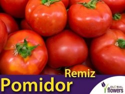 Pomidor Remiz F1 odporny, pod osłony  (Lycopersicon Esculentum) 0,1g