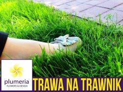 Mieszanka trawnikowa UNIWERSALNA - trawa do wysiewu. 0,9 kg