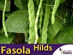Fasola szparagowa tyczna Hilds Neckarkönigin (Phaseolus vulgaris) XXL 100g