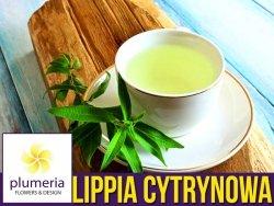 NOWOŚĆ Lippia trójlistna (Aloysia citrodora) Werbena cytrynowa Sadzonka C1