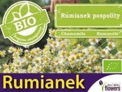 BIO Rumianek pospolity (Matricaria chamomilla) 0,1g