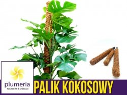 Palik kokosowy tyczka - podpora do roślin 40 cm x 25 mm - 1 szt.