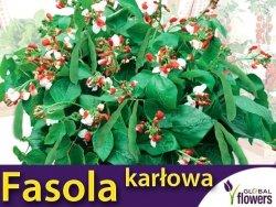 Fasola wielokwiatowa karłowa HESTIA ozdobna (Phaseolus c.) nasiona 40g