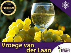 Winorośl 'Vroege van der Laan' deserowo-przerobowa (Vitis) Sadzonka C2