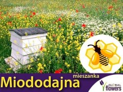 Kwietna łąka Mieszanka bylinowa roślin miododajnych na TERENY SUCHE nasiona XXXL 1kg