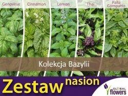 Kolekcja Bazylii (zestaw 5 odmian) nasiona