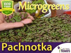 Microgreens - Pachnotka zwyczajna purpurowa 3g