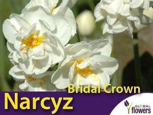 Narcyz pełny wielokwiatowy 'Bridal Crown' (Narcissus) CEBULKI 4 szt.