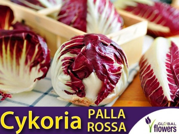 Cykoria sałatkowa Palla rossa 3 (Cichorium intybus) 0,5g