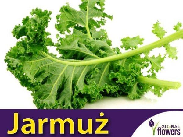 Jarmuż Halbhoher grüner krauser Zielony ( acephala var. sabellica)