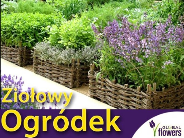 Ogród ziołowy na wiele la