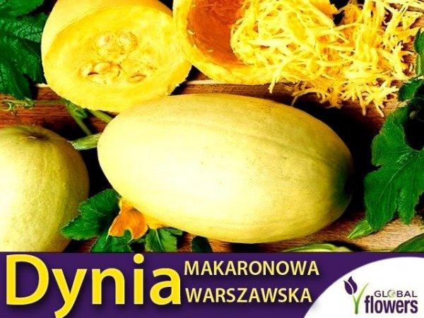 Dynia makaronowa Warszawska (Cucurbita pepo) 2g