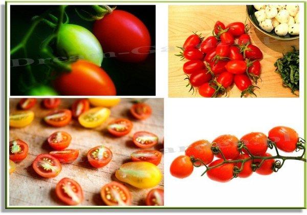 Pomidor Szejk uprawiany jest również jako roślina ozdobna