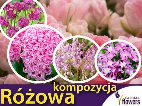 """Kolorowy ogród """"Harmonia barw"""" Kompozycja różowa CEBULKI"""