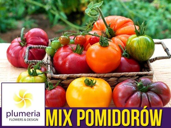 MIX najsmaczniejszych pomidorów - zestaw 5 odmian pomidorów nasiona