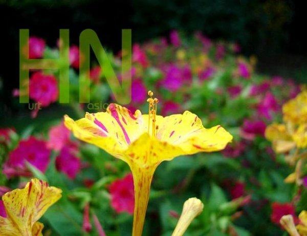 Kolorowe kwiaty dziwaczka