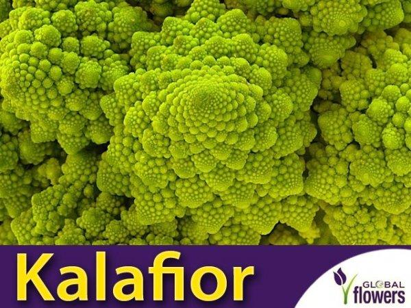 Kalafior Romanesco natalino Zielony