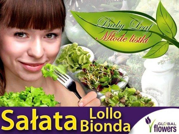 Baby Leaf (Lactuca sativa) Sałata liściowa Lollo Bionda