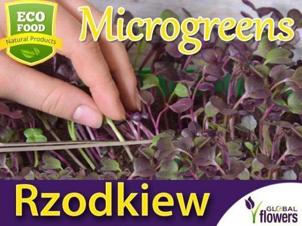 Microgreens - Rzodkiew 3g