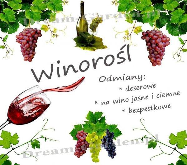 Winorośl odmiany deserowe