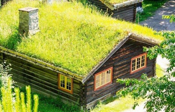 łąka kwietna na dachu mieszanka traw