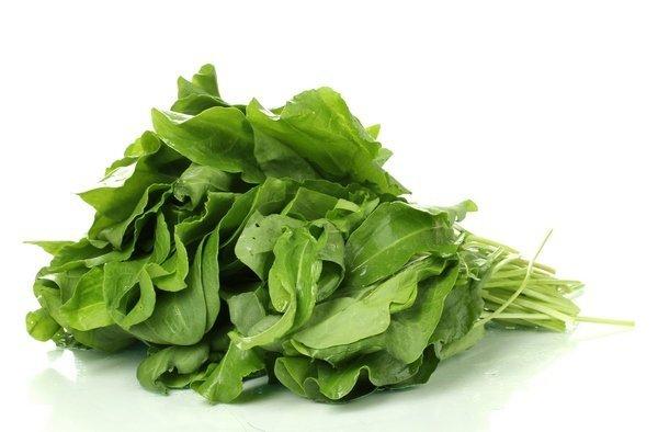 Zdrowy, zielony szczaw