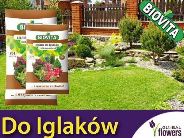 Ziemia do Iglaków, azalii, rododendronów, hortensji, borówki, wrzosów 20L
