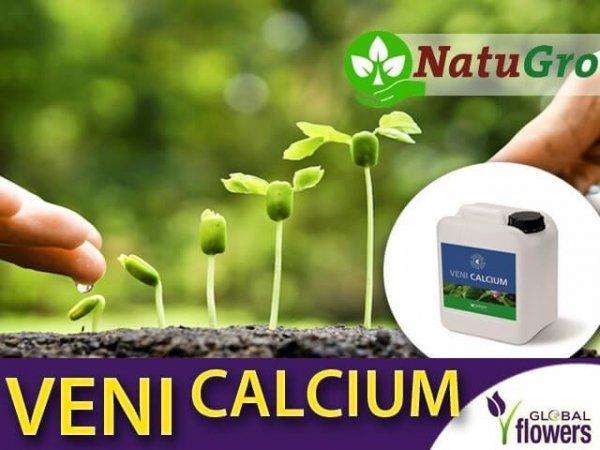 Veni Calcium - uzupełnia niedobór wapnia