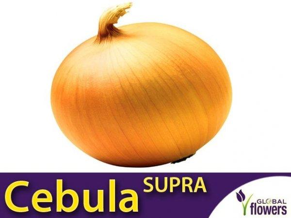 Cebula Supra (Allium cempa) XXL 500g
