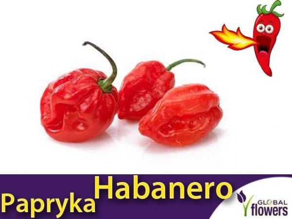 Papryka Chili Habanero czerwona