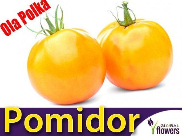 Pomidor Ola Polka