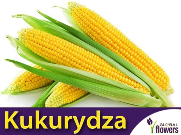 Kukurydza cukrowa Super Słodka Gucio (Zea mays ssp.saccharata) 10 g