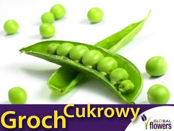 Groch Cukrowy - zielony groszek- Iłówiecki (Pisum sativum) 40g