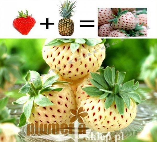 Truskawka Biała Truskawka + Ananas
