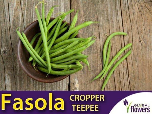 Fasola szparagowa karłowa zielonostrąkowa Cropper Teepee (Phaseolus vulgaris)