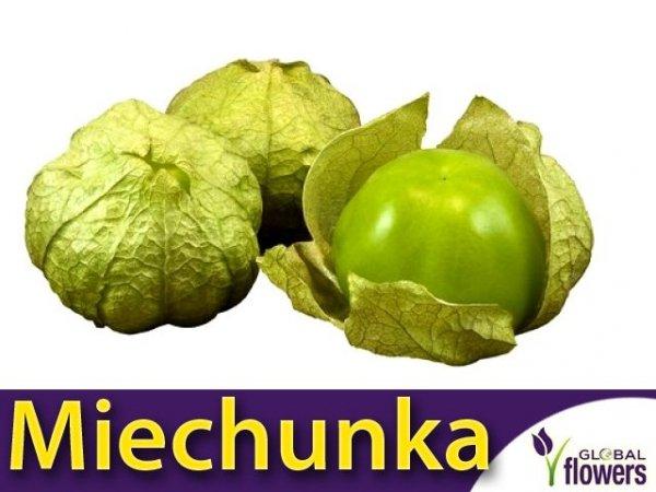 Miechunka pomidorowa